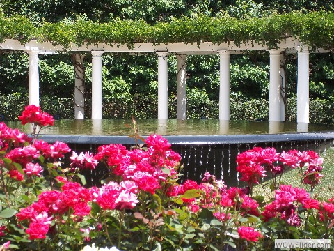 Red Roses & Fountain 7.10